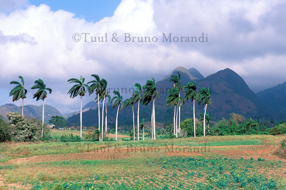 Cuba, Trinidad de Cuba, Patrimoine mondial de l'UNESCO, Vallée de San Luis // San Luis valley, Trinidad de Cuba, Cuba, UNESCO world heritage