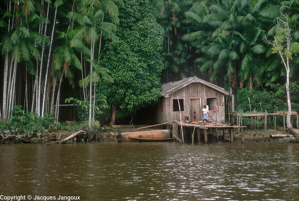 Brazil, Amazon region, Para State. Amazon - Tocantins estuary complex, Marajo Island. House of riverside dwellers. açai (assai) palms  (Euterpe oleracea, Arecaceae, Palmae).
