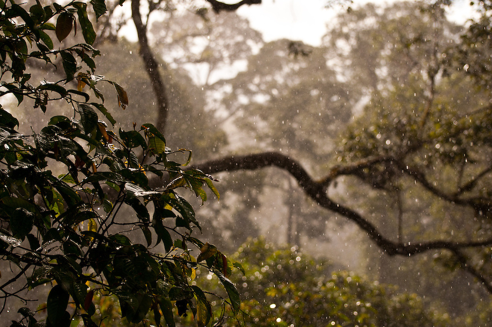 A rain shower hits the canopy of the lowland dipterocarp forests of Danum Valley, Sabah, Malaysia.  This photo was taken from the canopy tower of the Danum Valley Field Center.