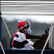 Jockey's wait in the starting gate before the race start during a day at the Races at the Gore Race Meeting, Gore, Southland, New Zealand. 18th December 2011. Photo Tim Clayton