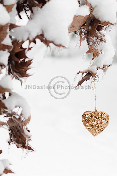 Golden heart hangs from snow covered oak branch