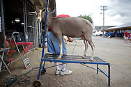Sunday August 14, 2011 was the final day of the Wisconsin State Fair at State Fair Park in West Allis, Wisconsin.