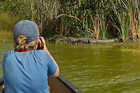 A boy (age 7) photographing an Alligator.  Everglades National Park, Nine Mile Pond.
