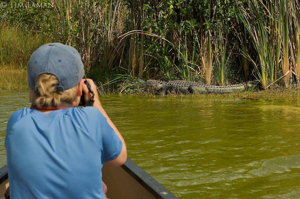 A boy (age 7) photographing an Alligator.  Everglades National Park, Nine Mile Pond.