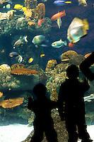 Young boys enjoy the aquariam exhibit at the Minnesota Zoo.