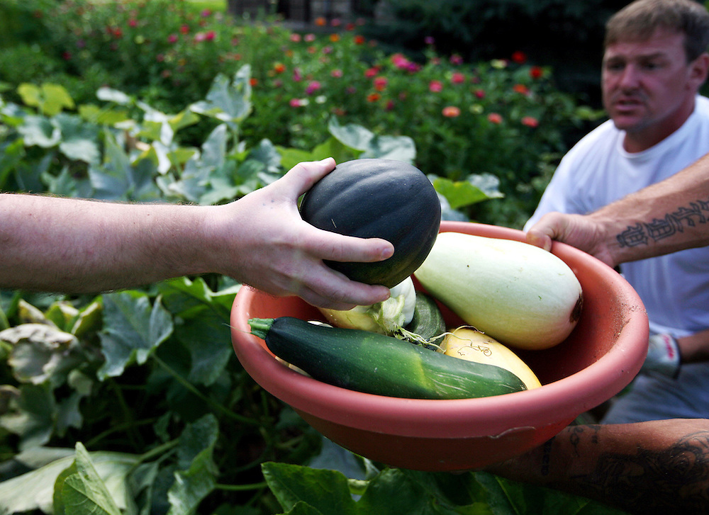 Inmates harvest vegetables in the garden at the Minnesota Correctional Facility in Red Wing August 20, 2012.
