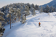 A person is  snowshoeing in the afternoon in Boulder, Colorado after a fresh snowfall.