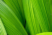 Fine art Palm leaves in the spring