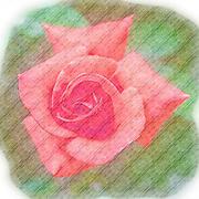 Digitally enhanced orange rose flower with green foliage background