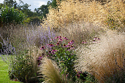 Border at Fields Farm in early autumn. Includes Deschampsia cespitosa 'Goldtau' (syn. Golden Dew), Echinacea purpurea, Stipa tenuissima, Perovskia atriplicifolia 'Blue Spire' and Stipa gigantea