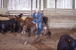 April 30 2017 - Minshall Farm Cutting 2, held at Minshall Farms, Hillsburgh Ontario. The event was put on by the Ontario Cutting Horse Association. Riding in the 1,000 Amateur Class is James Cook on Dual Peps Tom Cat owned by the rider.