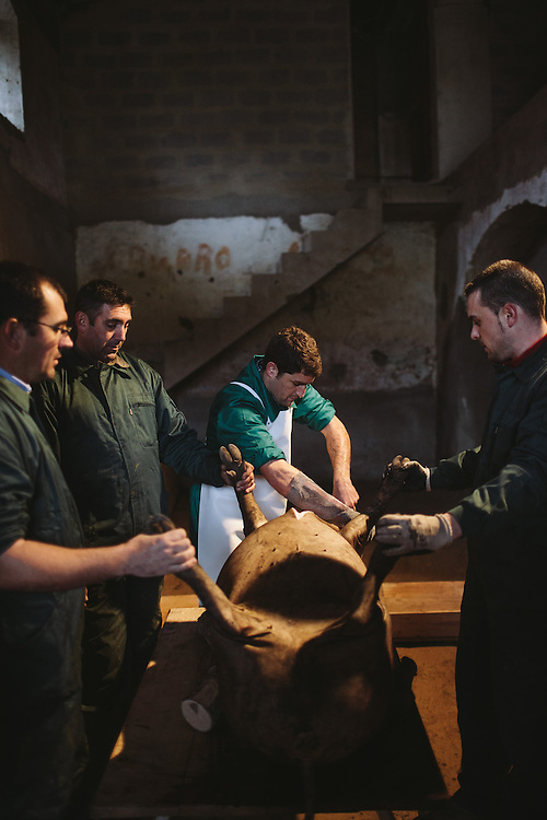 Antonio Blás, Matarife (slaughterman), seperating the back fat in order to make lard. Finca Al Cornocal, Extramadura (Barajoz Province), Spain.