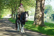 © Licensed to London News Pictures. 15/05/2014. Windsor, UK. Musician Cod of the Household Cavalry takes shire horse Achillies on a morning exercise walk. The second day of The Royal Windsor Horse Show, set in the grounds of Windsor Castle. Established in 1943. Photo credit : Stephen Simpson/LNP