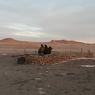 Mongolia. Bayan zag dinozaures and camel  area in the. Gobi desert.  Bulgan - Mongolia  / Bayan Zag  region des dinosaures et des chameaux dans le desert de Gobi  Bulgan - Mongolie