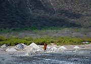 EL SOD: THE SALT OF LIFE<br />  <br />  El Sod, the House Of Salt, is a village located 90 km from Yabelo, the capital of Borana people in South Ethiopia. It stands on the edge of an extinct volcano wide of 1,8 km diameter, with a salted lake in the crater. For centuries, men dive into the lake to collect the salt and sell it across Ethiopia, Somalia and Kenya<br /> <br />  It takes 1 hour on a narrow path to go down the 2,5 km from the village to the lake, 340 meters lower. The best view on the crater can be spotted from the recently built mosque.<br /> Every miner works as a free lance, independent from any company or boss. Most of the time divers are naked, the salted water being so agressive that it destroys everything, including clothes and shoes.<br />  Miners try to protect their nose and ears with plugs made of soil wrapped in plastic bags. There's no protection for the eyes: many suffer heavily from blindness.<br />  When the weather is good after rains (Borana wait for it for months since the area suffers from drought) more than 200 men dive into the lake. More and more children are joining for the families to get some extra revenue. The parents are aware of the dangers but they don't have any choice if they want to survive.<br /> <br /> Photo Shows:  Women do not take part in the salt extraction. few of them go down in the carter to collect wood or branches for the cattle. As men are most the time naked , and some a re muslims, they also prefer to stay away, Usually women are dedicated to the hardest tasks in the Borana Culture, This is an exception<br /> ©Eric lafforgue/Exclusivepix Media