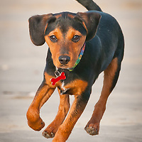 Brighton Dog Photography - Max on Lancing beach