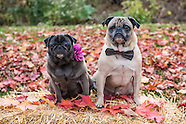 Fall Pet Photos at Bone Marche