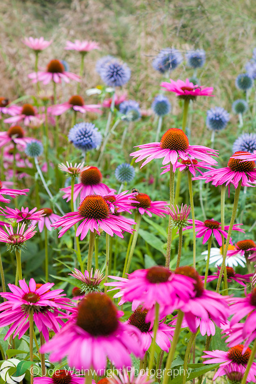 A beautiful mix of form and colour in an English herbaceous border.