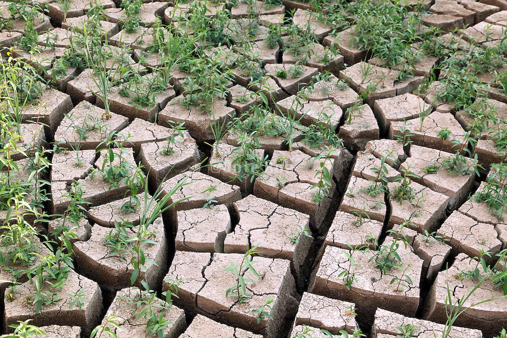 surface with deep zig-zag cracks of a dried-out clay ground where still grass is growing