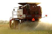 Custom harvester Justin Spielman from Newkirk, Oklahoma combines a field of canola near El Reno, Oklahoma.