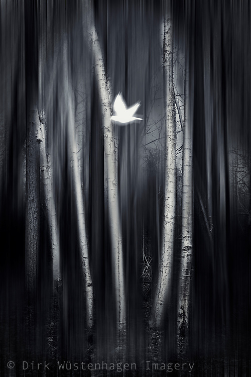 Abstraction of a bird flying through birch trees
