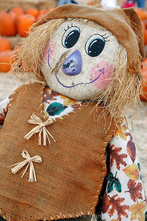 USA, California. Scarecrow at Pumpkin Patch.