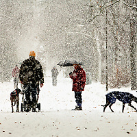 EDINBURGH, UK - 28th November 2010:  A couple walk their dogs in Inverleith Park in Edinburgh during heavy snow.  Heavy snow has fallen across large parts of the UK, disrupting travel.  Weather warnings of heavy and drifting snow are also in place for many places across the UK...(Photograph: Richard Scott/MAVERICK)