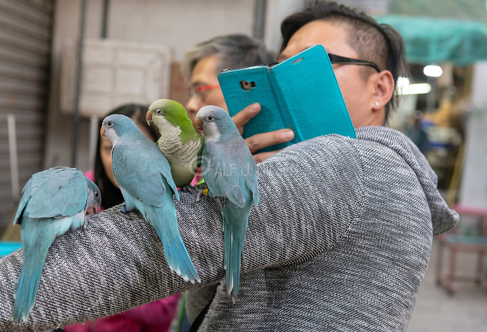 Photographing parakeets at Bird Garden (Yuen Po Street), Kowloon, Hong Kong, China.