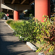 Vegetated bioswale detail of stormwater facilities, Eastbank Esplanade, Madison Street Parking Lot, Portland, Oregon.