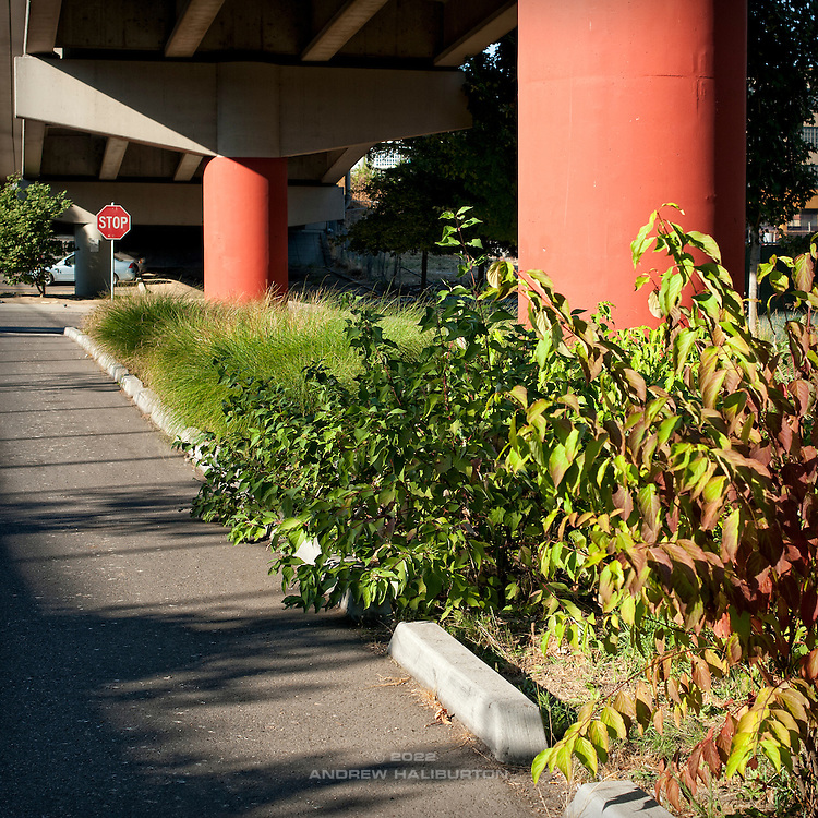 Vegetated bioswale detail of stormwater facilities, Eastbank Esplanade, Madison Street Parking Lot, Portland, Oregon.
