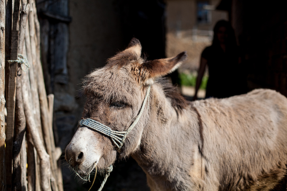 A donkey at the Roma part of the city of Crnik.