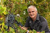 Peter Drayton Wines