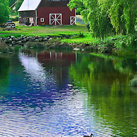 A barn and reflection pond featuring ducks along scenic highway US 101 on Hood Canal in the state of Washington.
