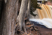Cedars and falls at Gooseberry State Park.