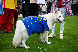 © Licensed to London News Pictures. 29/03/2017. London, UK. A dog dressed in an EU flag on College Green. British Prime Minister Theresa May has signed a letter to trigger Article 50 today. Photo credit : Tom Nicholson/LNP