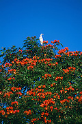 A bird suns himself in a tree near the Arecibo Observatory in Arecibo, Puerto Rico.