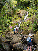 Waiotemarama Waterfall, near Hokianga, Northland, New Zealand.