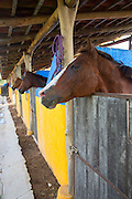 Polo pony, Costa Careyes, Costalegre, Jalisco, Mexico