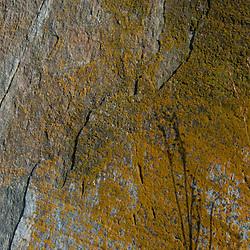 Rock Face with Lichen, Lower Negro Island, Castine, Maine, US