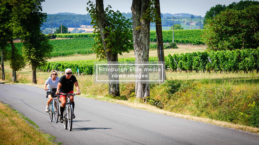 Tourists cycling past vineyards in the Dordogne, France in summer<br /> <br /> (c) Andrew Wilson | Edinburgh Elite media