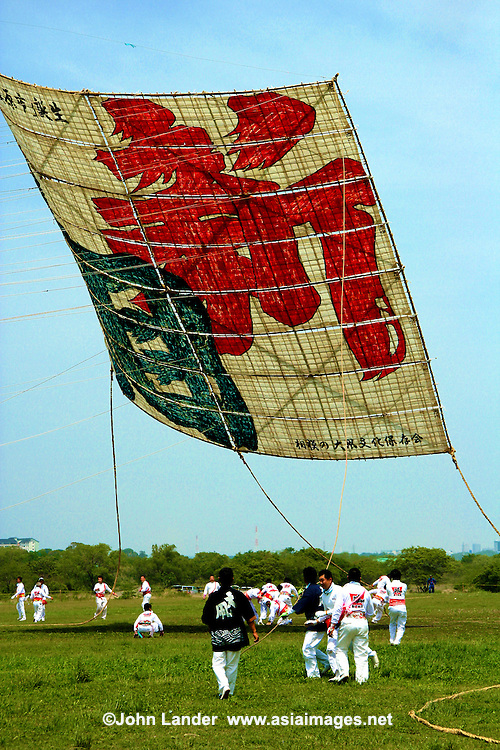 There are about a hundred different styles and types of Japanese kites, each region having its own unique shape. They are normally decorated with characters from Japanese folklore, mythology or have some religious or symbolic meaning. Traditionally kites are flown on boy's day May 5th.  At Harvest Festival kites are flown with stalks of rice attached as a symbolic offering of thanks for a good crop. Others are decorated with the face of a demon and would act as a talisman against evil.