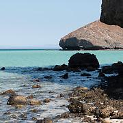 Bahia Balandra. La Paz, BCS. Mexico.