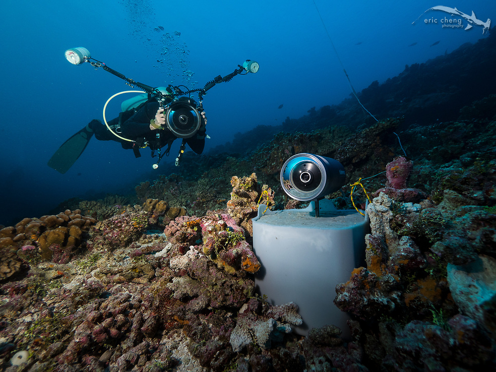 A cabled underwater research camera monitors the marbled grouper migration in Fakarava's south pass (Tomakohua), French Polynesia. The camera was placed by Laurent Ballesta's expedition team. Underwater photographer Mark Strickland photographs me, in the background.