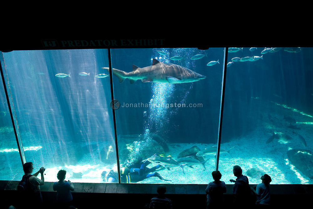 Visitors watch a scuba excursion in the shark tank at  the Two Oceans Aquarium located in the Victoria and Alfred Waterfront in Cape Town, South Africa.