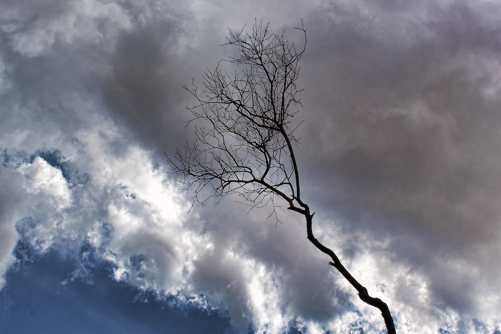 A lone silhouetted tree branch, dramatically framed with stormy cumulus clouds in Barcelona.
