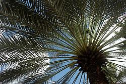 Palm trees in Aruba.