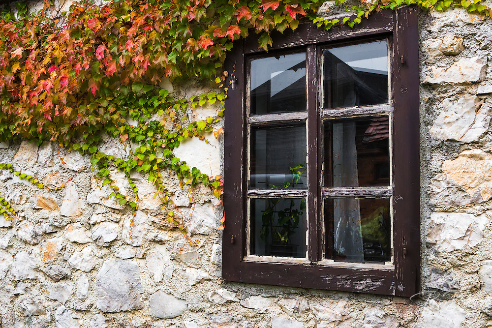 Ivy and window, Korana Village, Plitvice Lakes National Park, Croatia