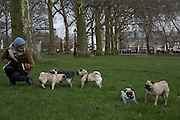 London Pugs Monthly Meetup, Greenpark. 5 March 2016.