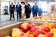 Koning Willem-Alexander en koningin Maxima tijdens een rondleiding bij Appelpakstation FruitMasters als onderdeel van het streekbezoek aan de Betuwe.<br /> <br /> King Willem-Alexander and Queen Maxima during a tour at Apple Pack Station FruitMasters as part of the regional visit to the Betuwe.