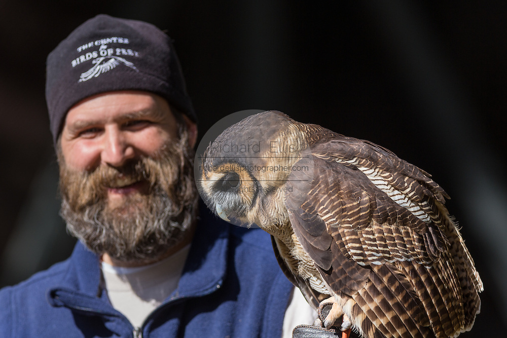 Education Director Stephen Schabel holds a Brown wood owl in at the Center for Birds of Prey November 15, 2015 in Awendaw, SC.